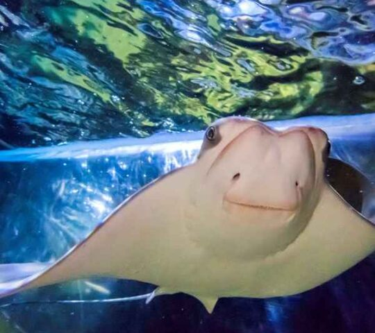Sea Life Aquarium Bray. Co. Wicklow